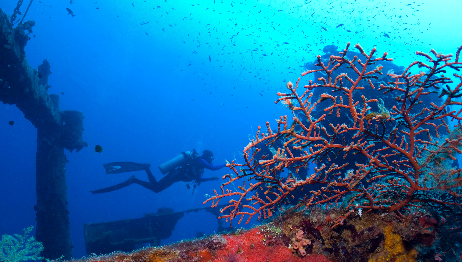 Wrecks and reefs