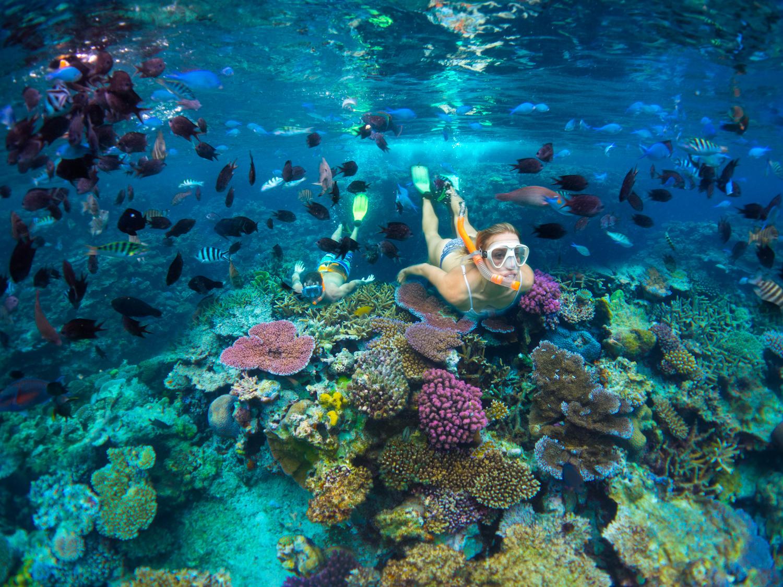 Snorkelling tour in Vanuatu